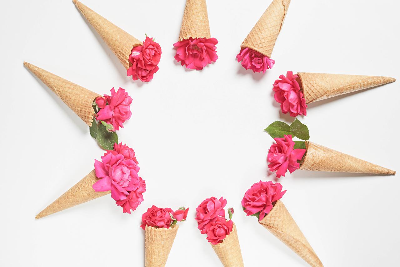 Skrivebordsbakgrunn Roser Rosa farge blomst Iskjeks Gratulasjonskort Mal Hvit bakgrunn rosa Blomster