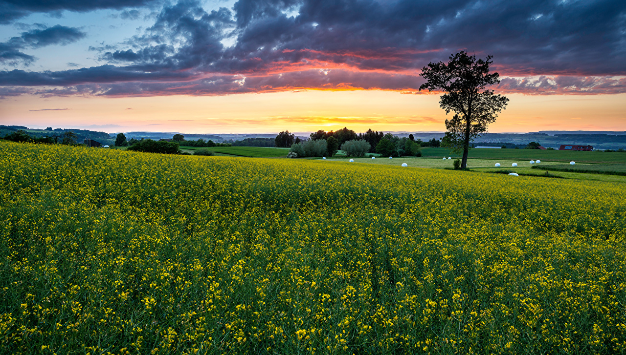 Pictures Switzerland Thurgau Nature Rapeseed Fields Evening Clouds oilseed rape