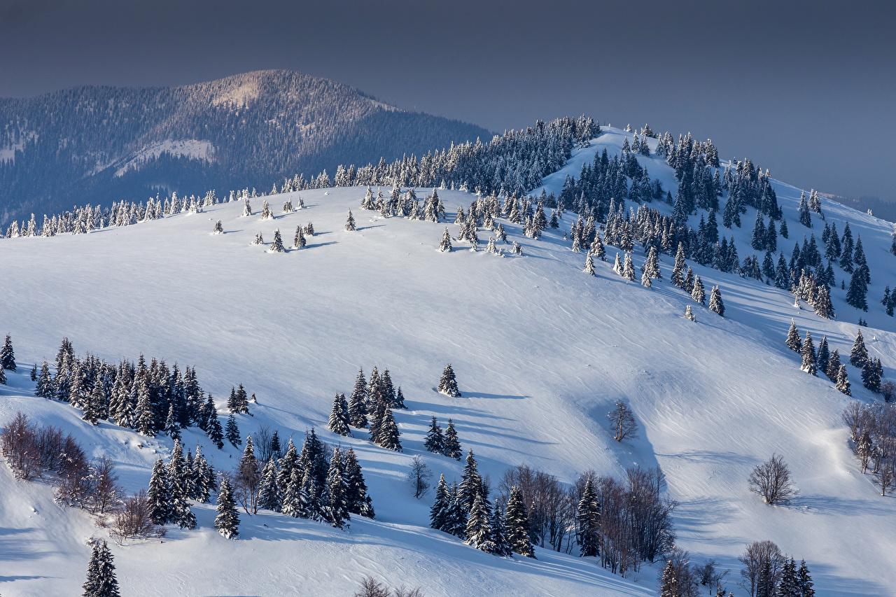 Foto Slowakei Donovaly Natur Winter Gebirge Fichten Hügel Schnee