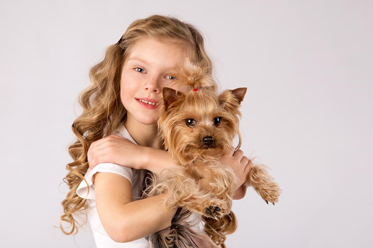 Fotos von Kleine Mädchen Yorkshire Terrier Hunde Kinder Hand Tiere Blick Farbigen hintergrund Starren