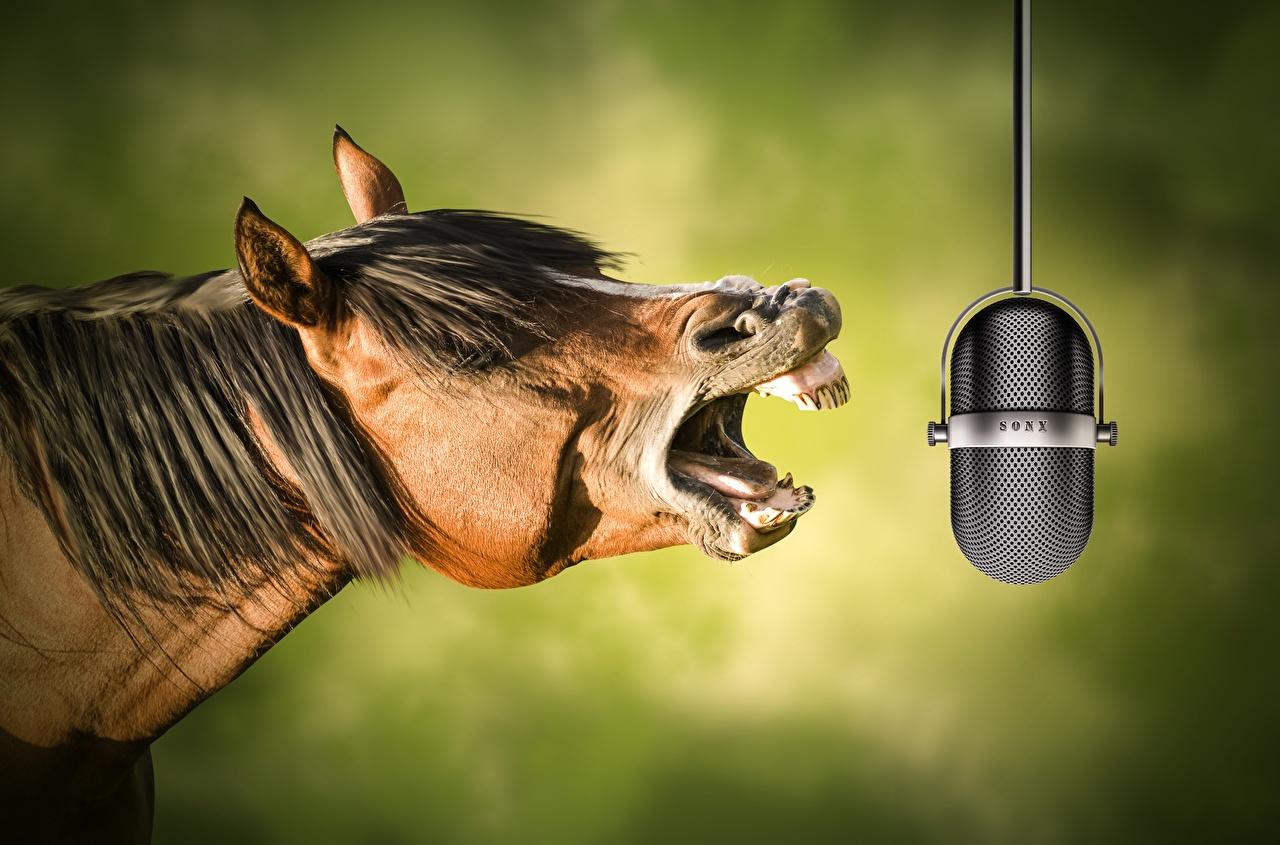 Afbeelding paard Microfoon Grappige Hoofd Dieren Paarden grappig een dier