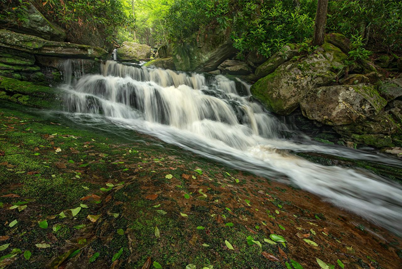 Bilder von USA Blackwater Falls State Park Virginia Natur Felsen Wasserfall Stein Laubmoose Vereinigte Staaten Parks Steine