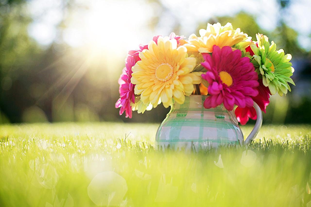 壁紙 ガーベラ 草 花瓶 花 ダウンロード 写真