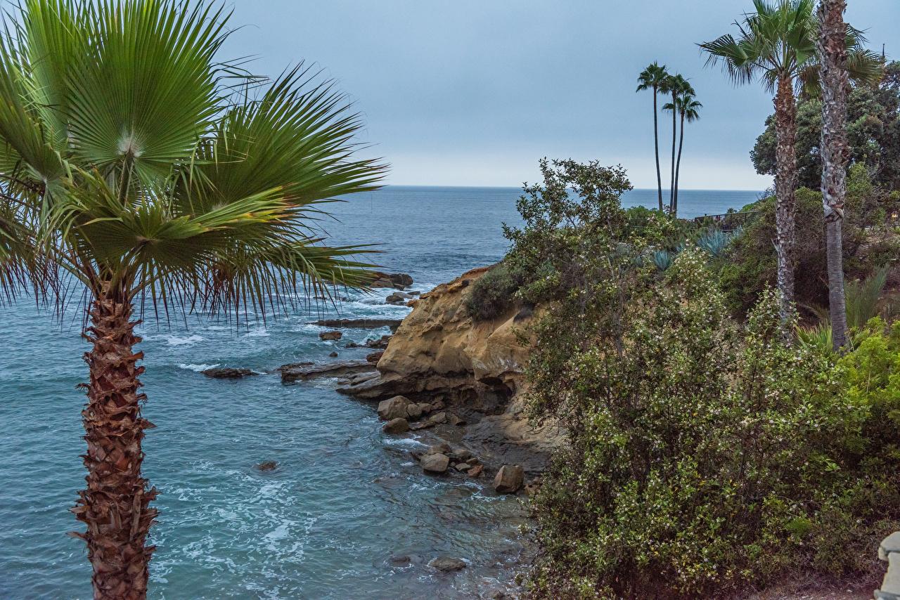 、アメリカ合衆国、海岸、石、Laguna Beach、カリフォルニア州、岩、ヤシ、岩石、自然、