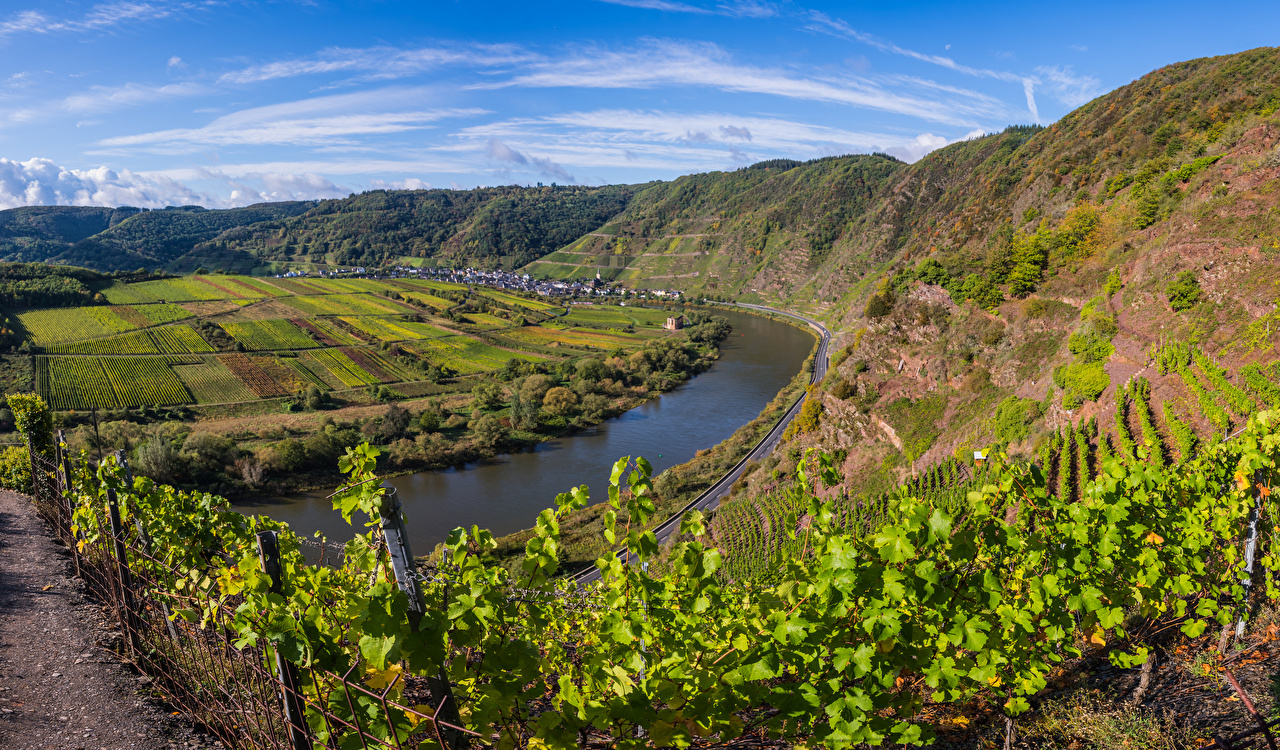 Picture Germany Calmont, Mosel River Vineyard Nature Hill river Rivers