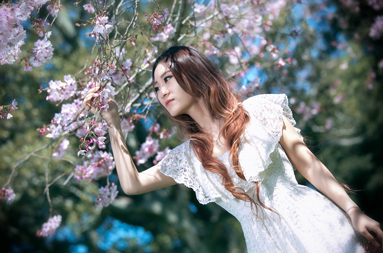 Picture Brown haired Cherry blossom blurred background Girls Asiatic Hands Branches Dress Sakura Bokeh female young woman Asian gown frock