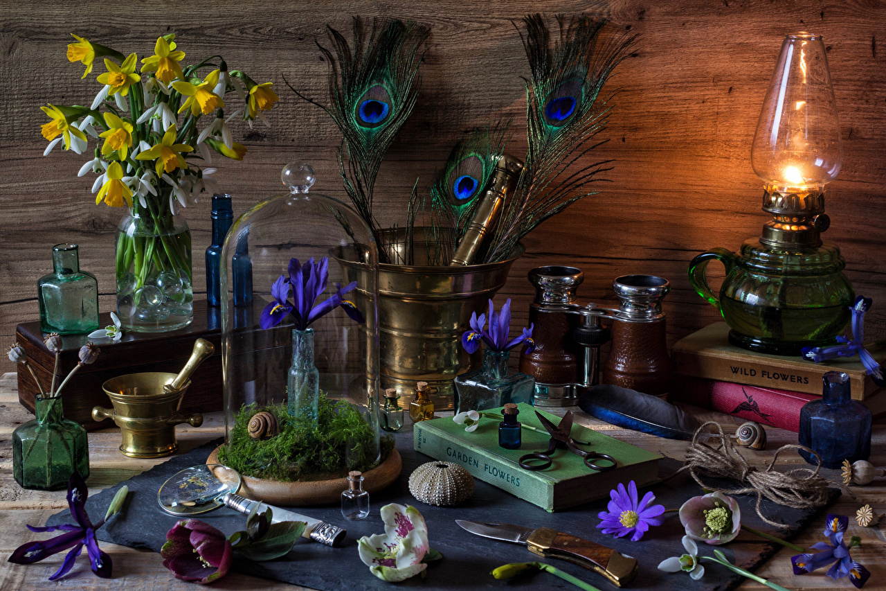 Image Kerosene lamp iris flower Daffodils Galanthus Book Still-life paraffin lamp Irises Flowers Narcissus Snowdrops books