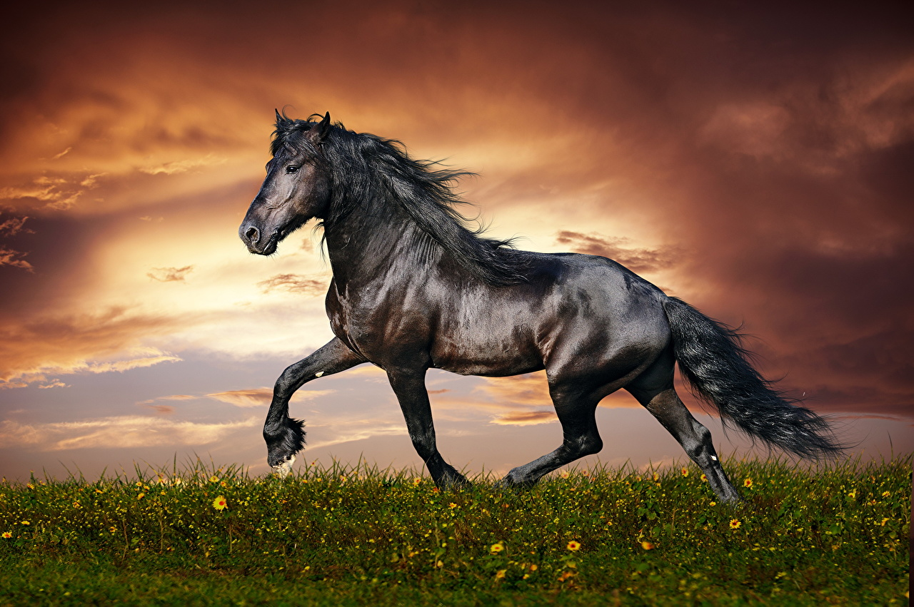 Pictures Horses Black Sky Tail Grass Clouds animal horse Animals