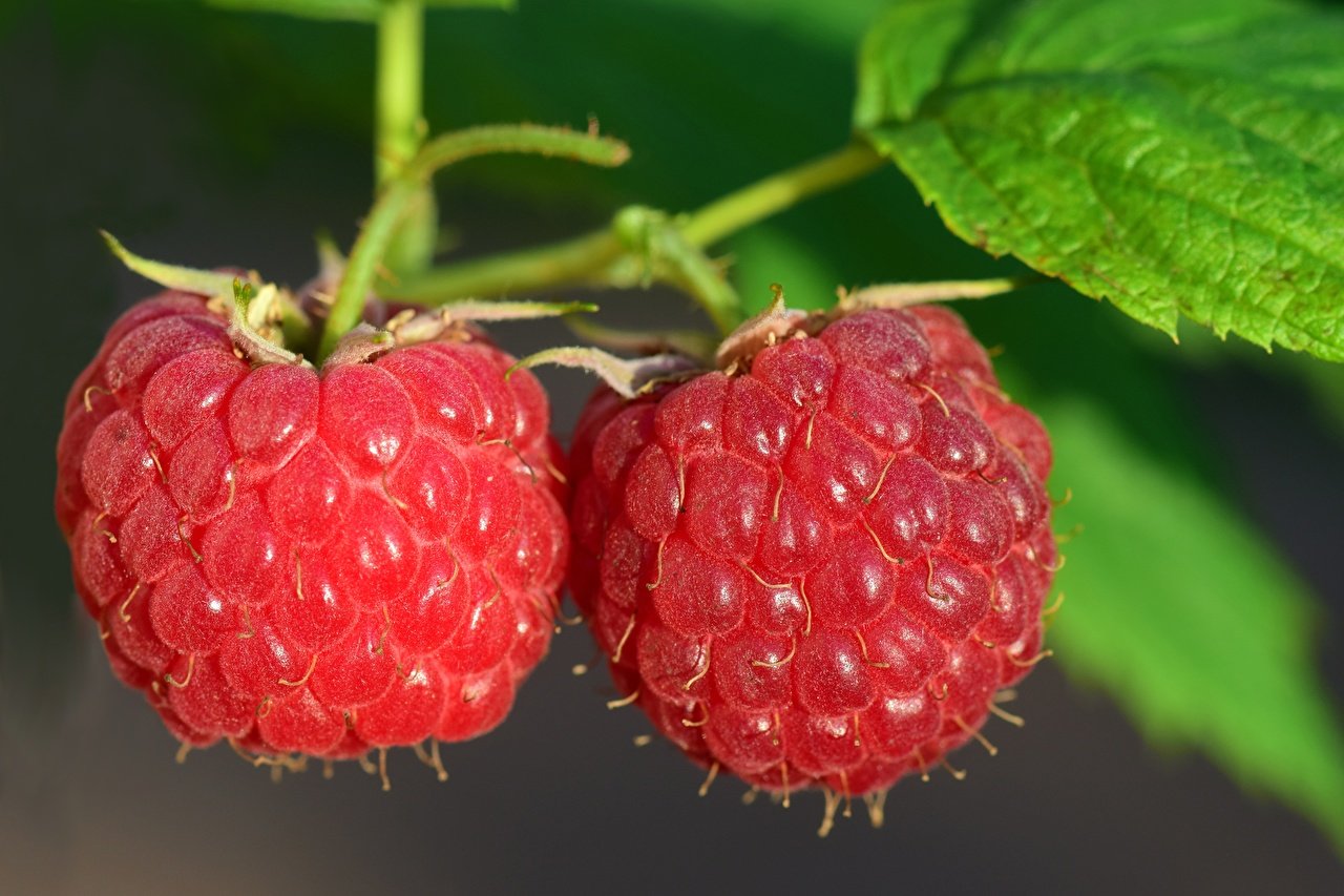 Images Red Raspberry Berry Closeup