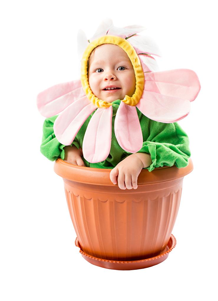Bilder Säugling komische Kinder Blumentopf Kreativ Kamillen Weißer hintergrund Design Baby Lustige lustiges lustiger kind
