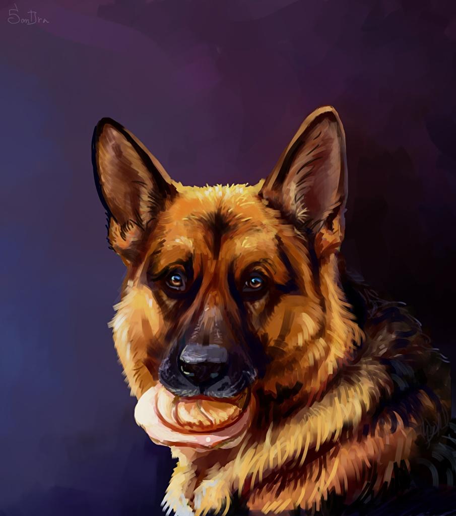 Sfondi Cane da pastore Cane da pastore tedesco cane Butterbrot Testa Animali Disegnate  per Telefono cellulare Cani dipinti animale