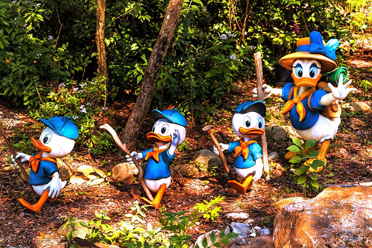 Image Florida duck USA Disney's Animal Kingdom park Nature Parks Design Ducks