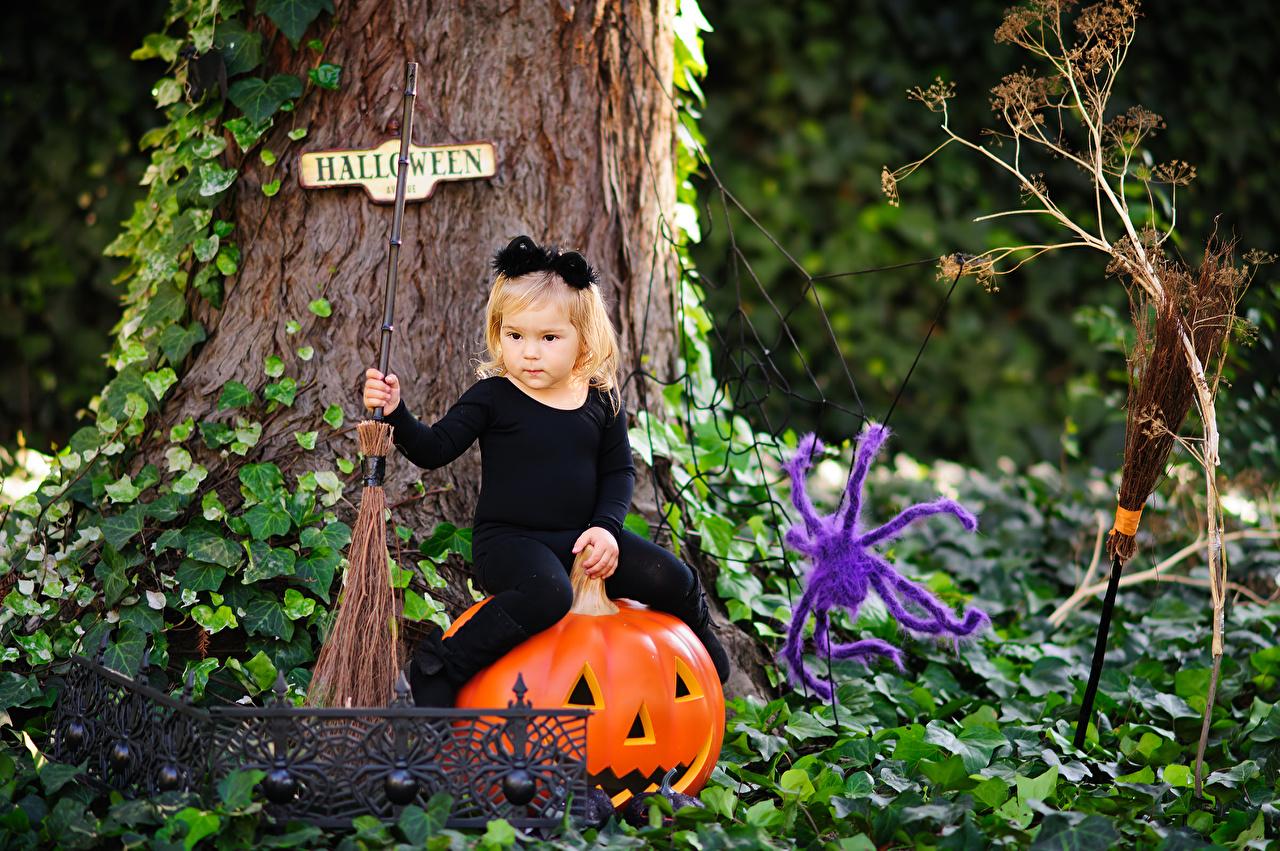 Hintergrundbilder Kleine Mädchen Webspinnen Kinder Kürbisse Halloween Sitzend sitzt sitzen
