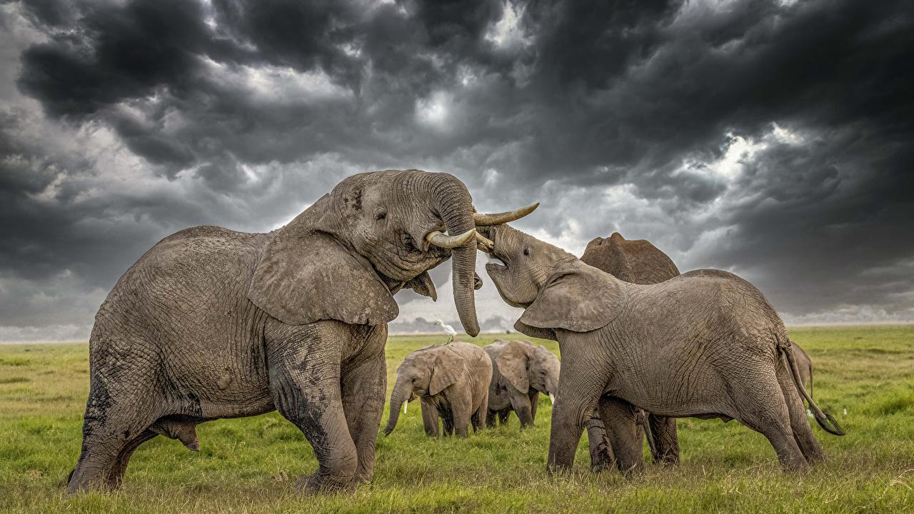 Photo Elephants HDR Animals elephant HDRI animal