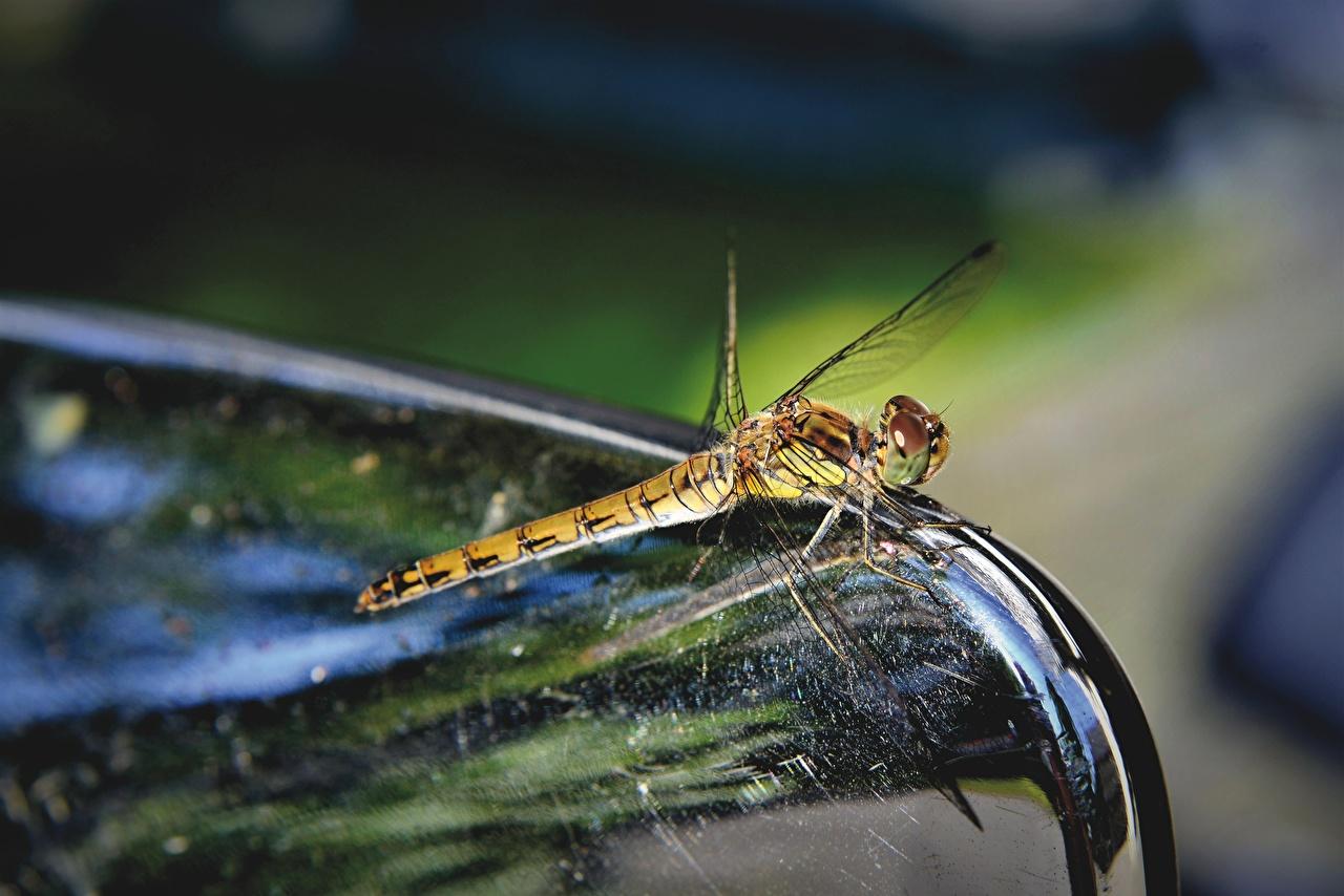 Fotos von Insekten Libellen Bokeh hautnah ein Tier unscharfer Hintergrund Tiere Nahaufnahme Großansicht