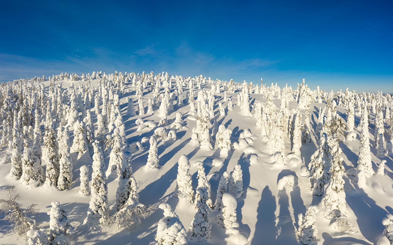 Desktop Wallpapers Finland Riisitunturi National park Winter Nature Snow Parks Trees