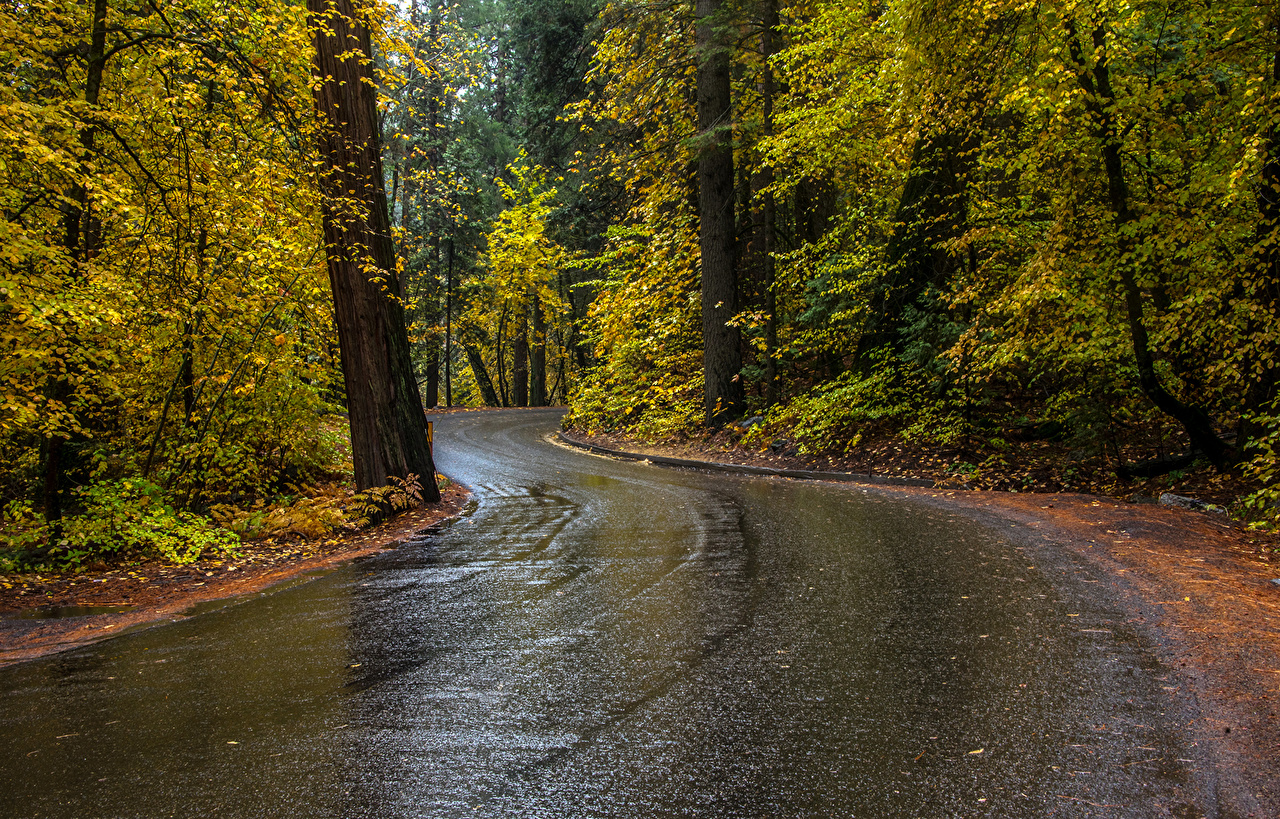 Desktop Wallpapers Yosemite USA Autumn Nature park Roads Forests Trees Parks forest