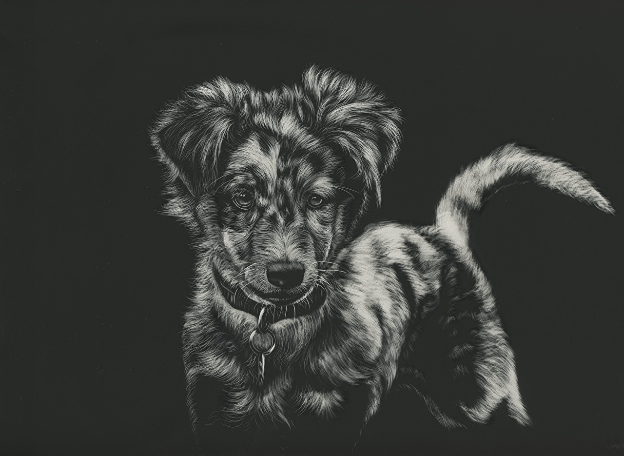 Images Dogs Black And White Animals Painting Art Black Background