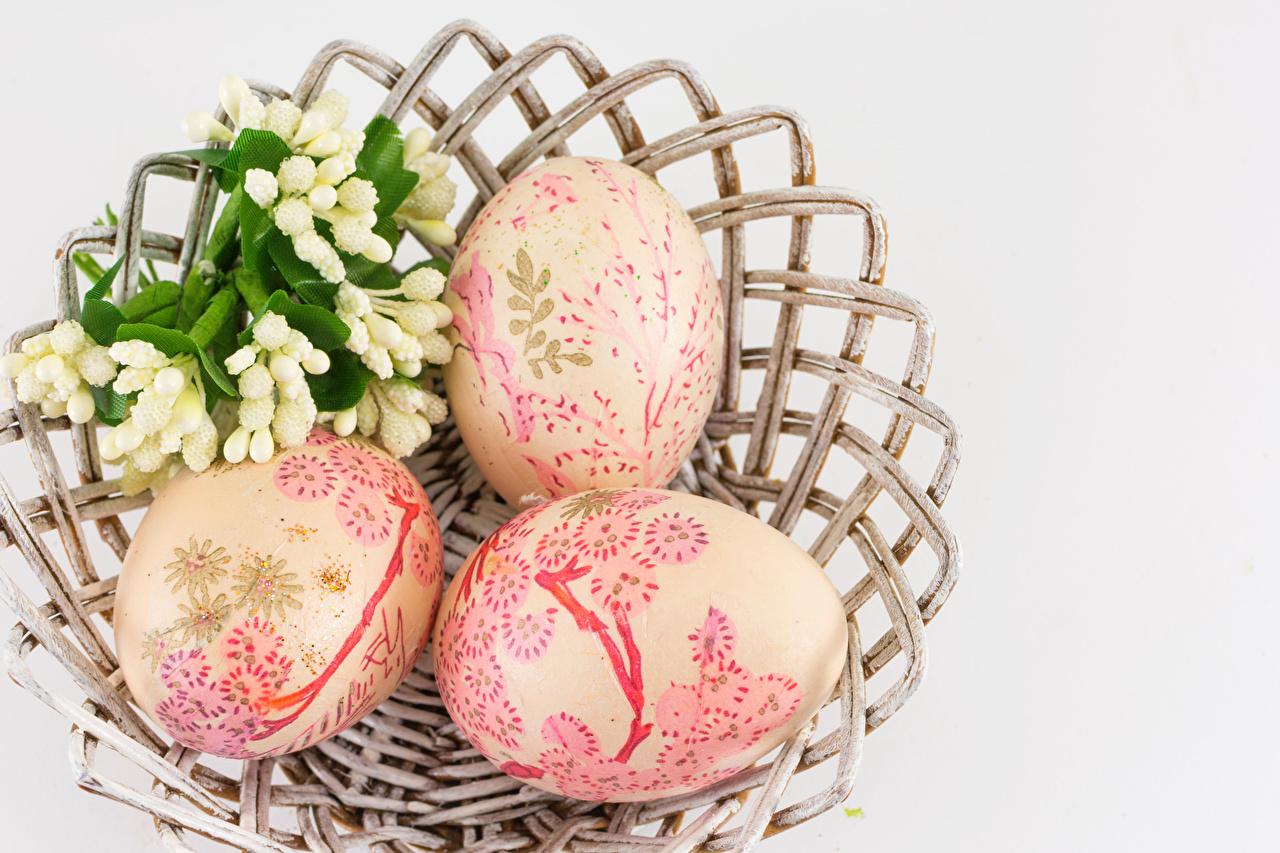 Photo Easter Eggs Three 3 Gray background Design egg
