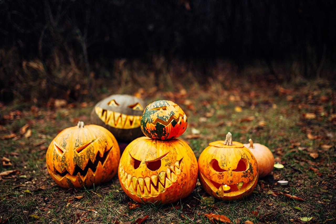 Desktop Wallpapers Pumpkin Halloween Holidays