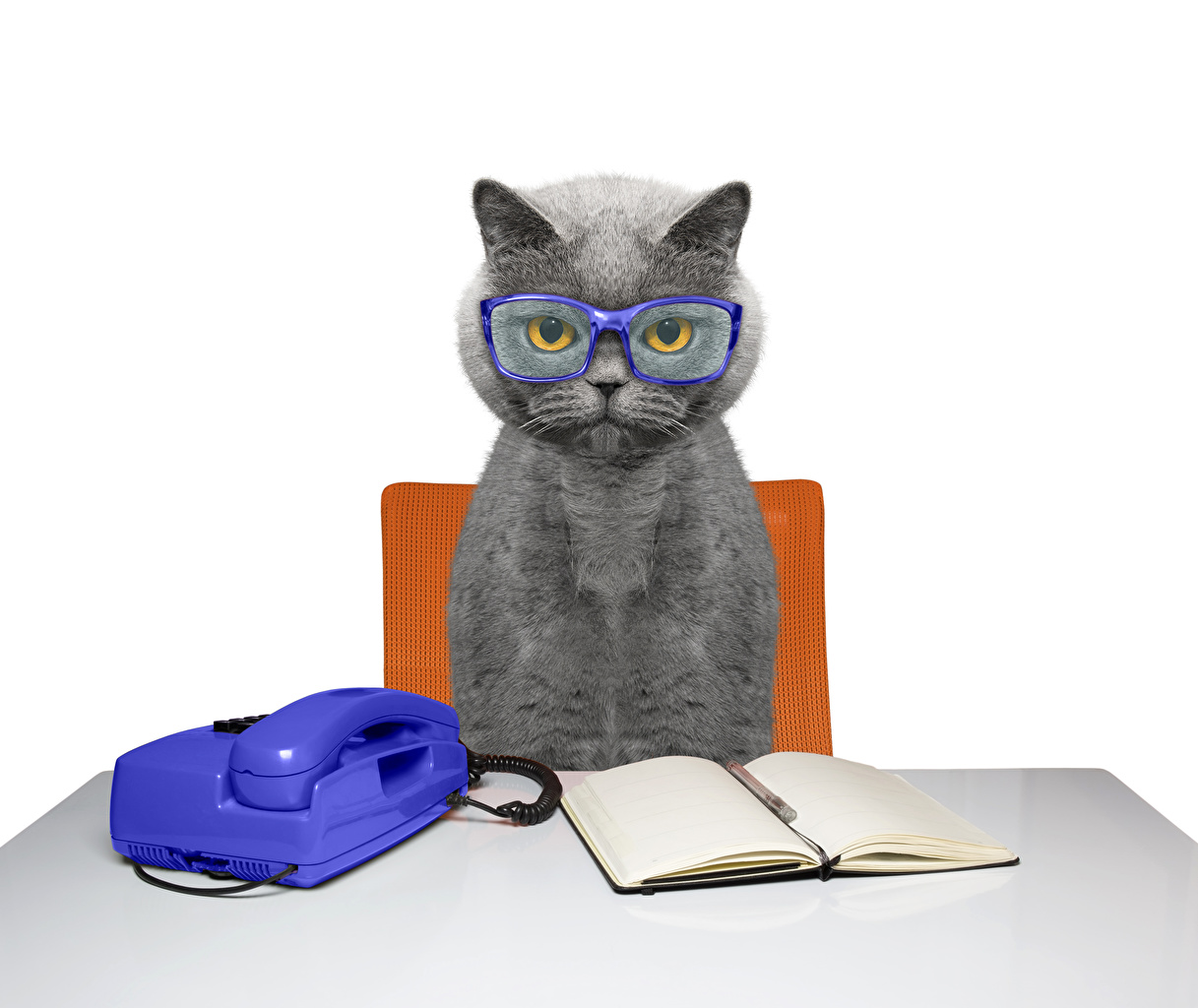 Photo Cats phone Notebooks Table Glasses Animals Telephone eyeglasses animal