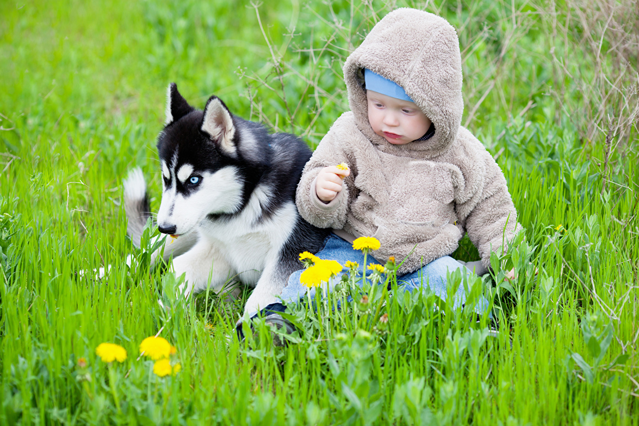 Photos Husky Dogs Baby child sit Animals dog Infants newborn Children Sitting animal