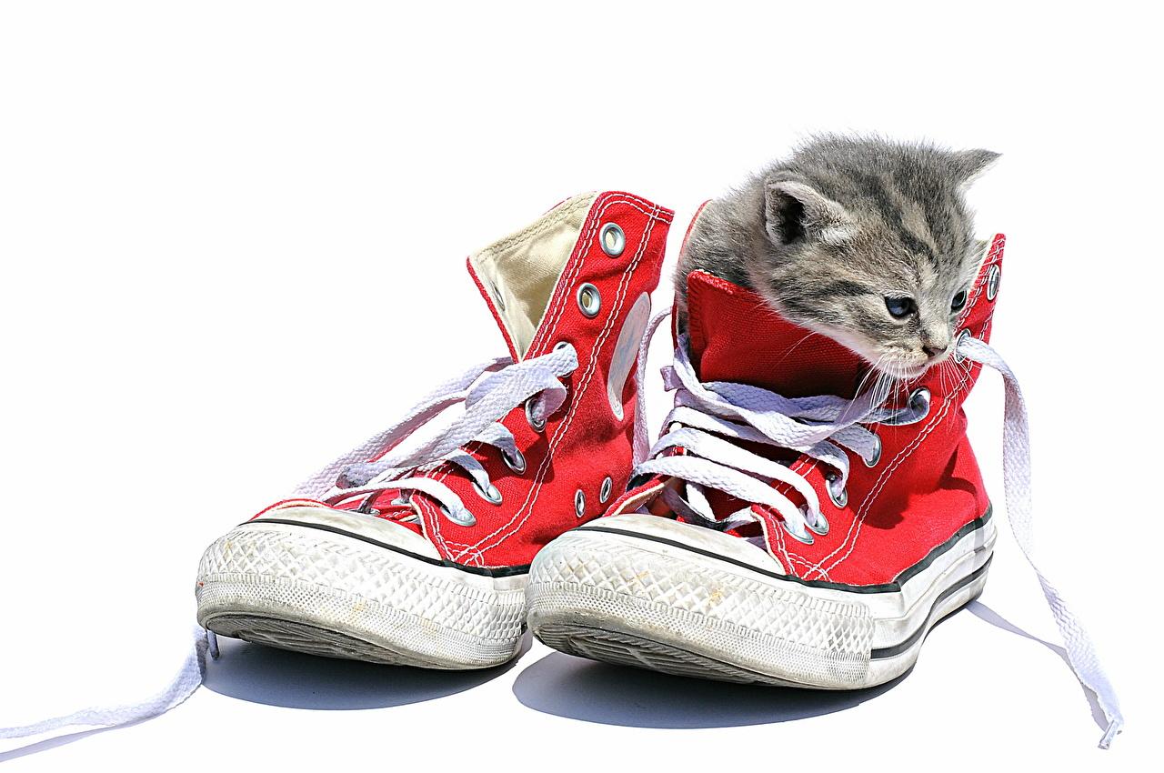 壁紙 飼い猫 プリムソール靴 子猫 靴ひも 白背景 動物 ダウンロード 写真