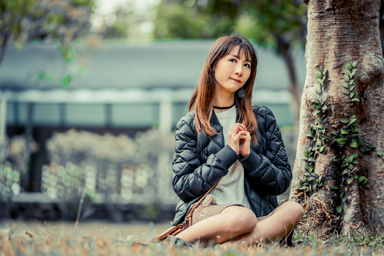 Fotos von Bokeh Jacke junge Frauen Asiaten Baumstamm Hand Sitzend unscharfer Hintergrund Mädchens junge frau Asiatische asiatisches sitzt sitzen