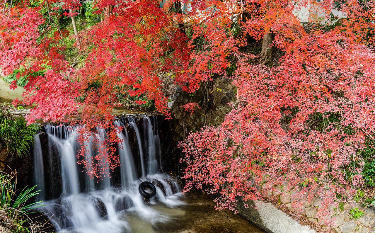 Hintergrundbilder Japan Shiga Natur Felsen Wasserfall Park Ast