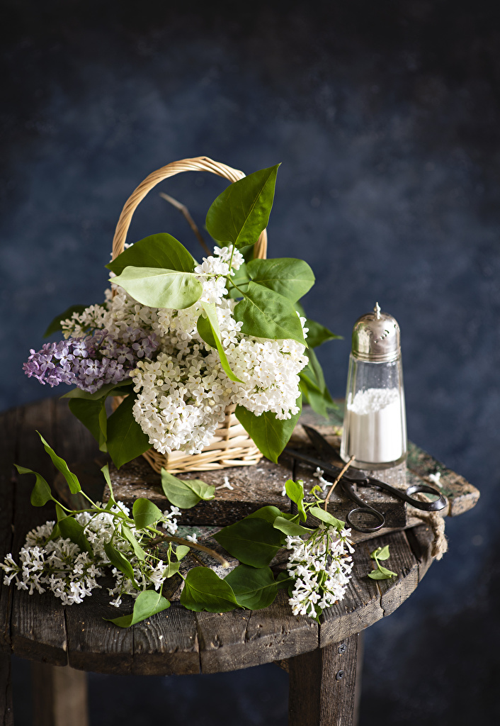 Pictures Syringa Flowers Wicker basket Branches  for Mobile phone Lilac flower