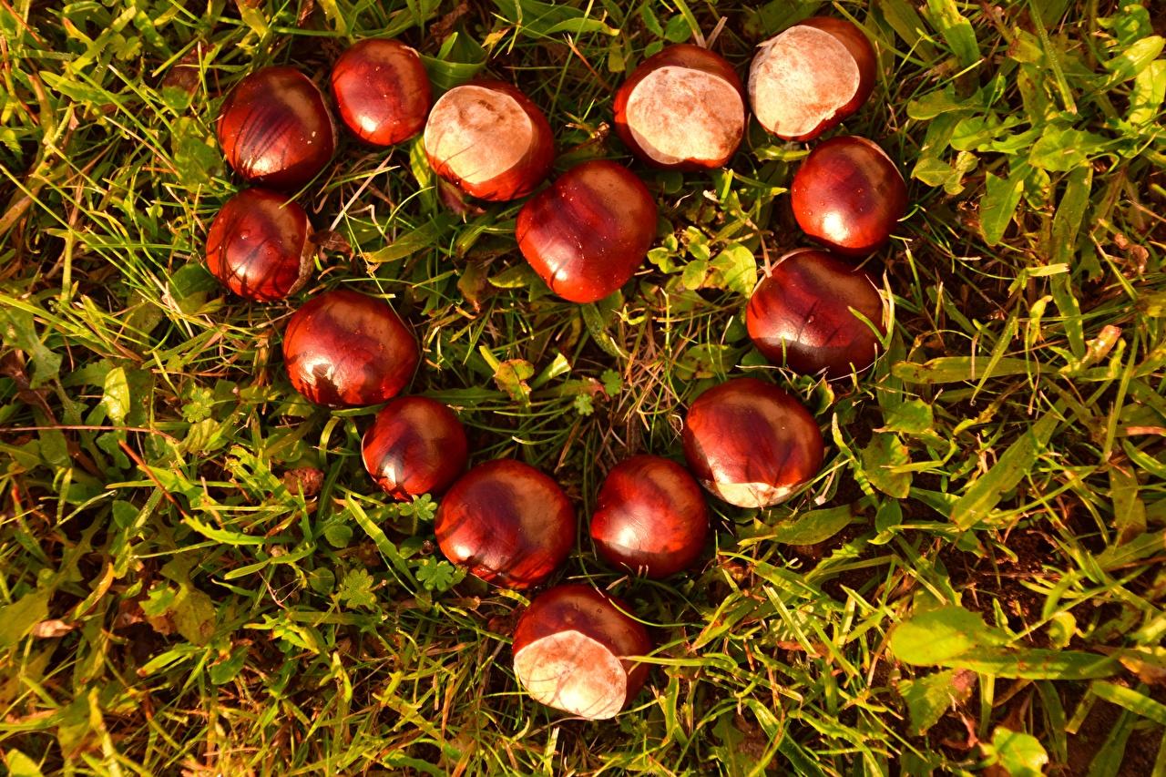 Photo Chestnut Heart Grass Closeup