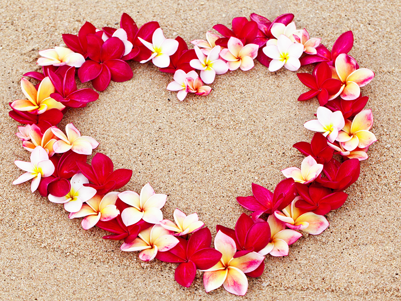 Wallpapers Valentine's Day Heart Sand Flowers Plumeria Design