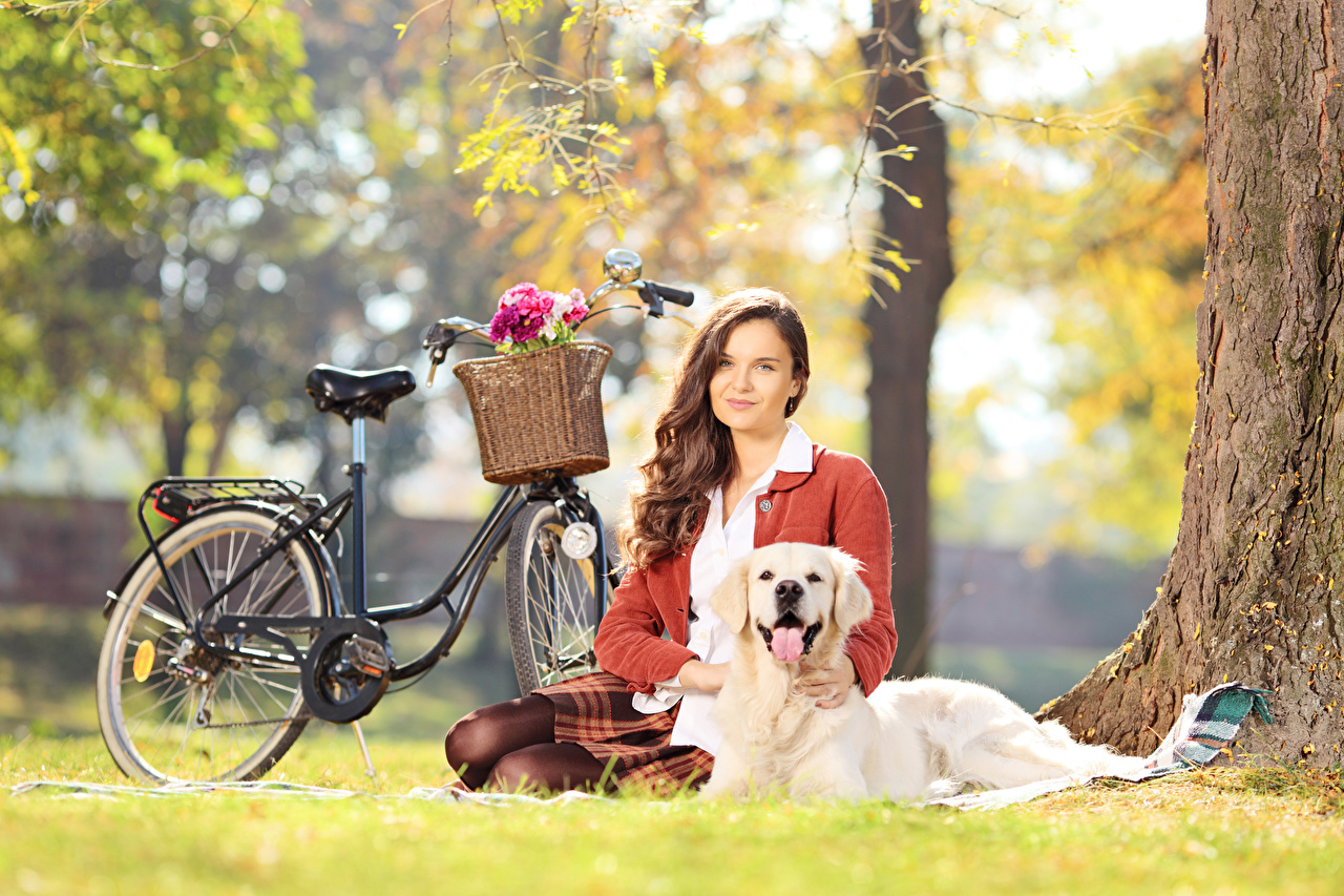Images Golden Retriever Dogs Brown haired Bokeh bike Girls Wicker basket sit Grass animal dog blurred background Bicycle bicycles female young woman Sitting Animals