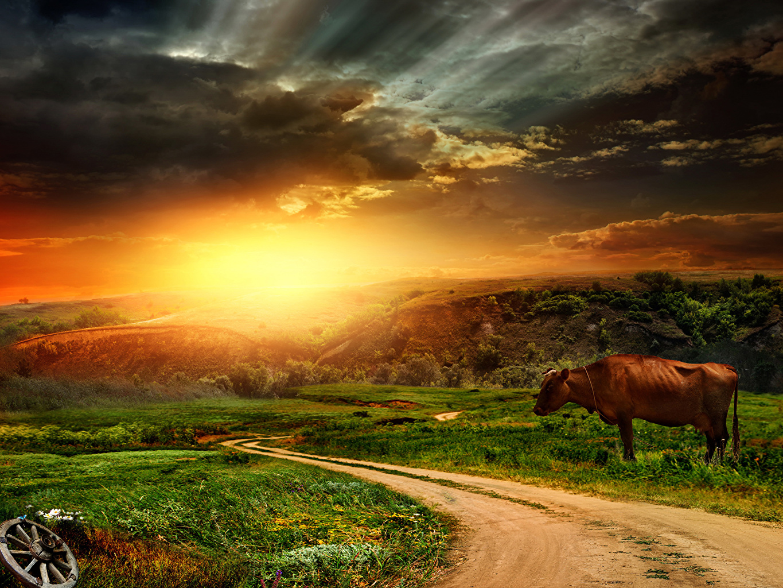 、風景写真、道、朝焼けと日没、牛、草原、空、草、自然、