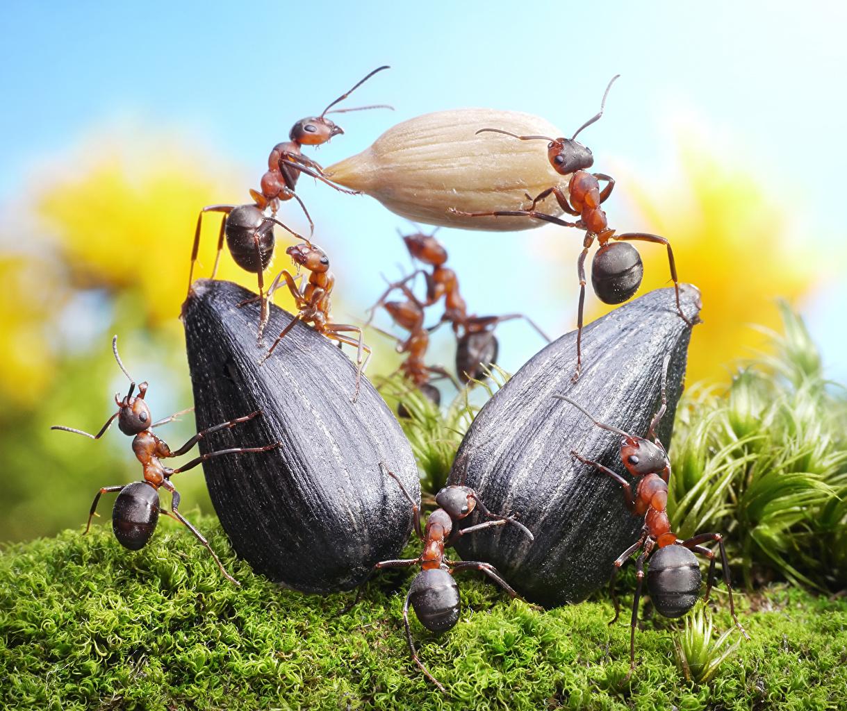 ,蚂蚁,特寫,Sunflower seed,,動物,