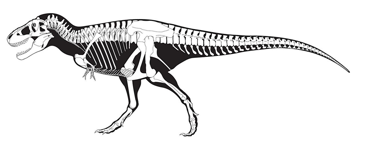 fotos tyrannosaurus rex dinosaurier skelett