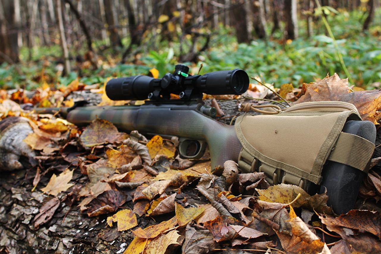 Images Sniper rifle Rifles Foliage Autumn military Leaf rifle Army