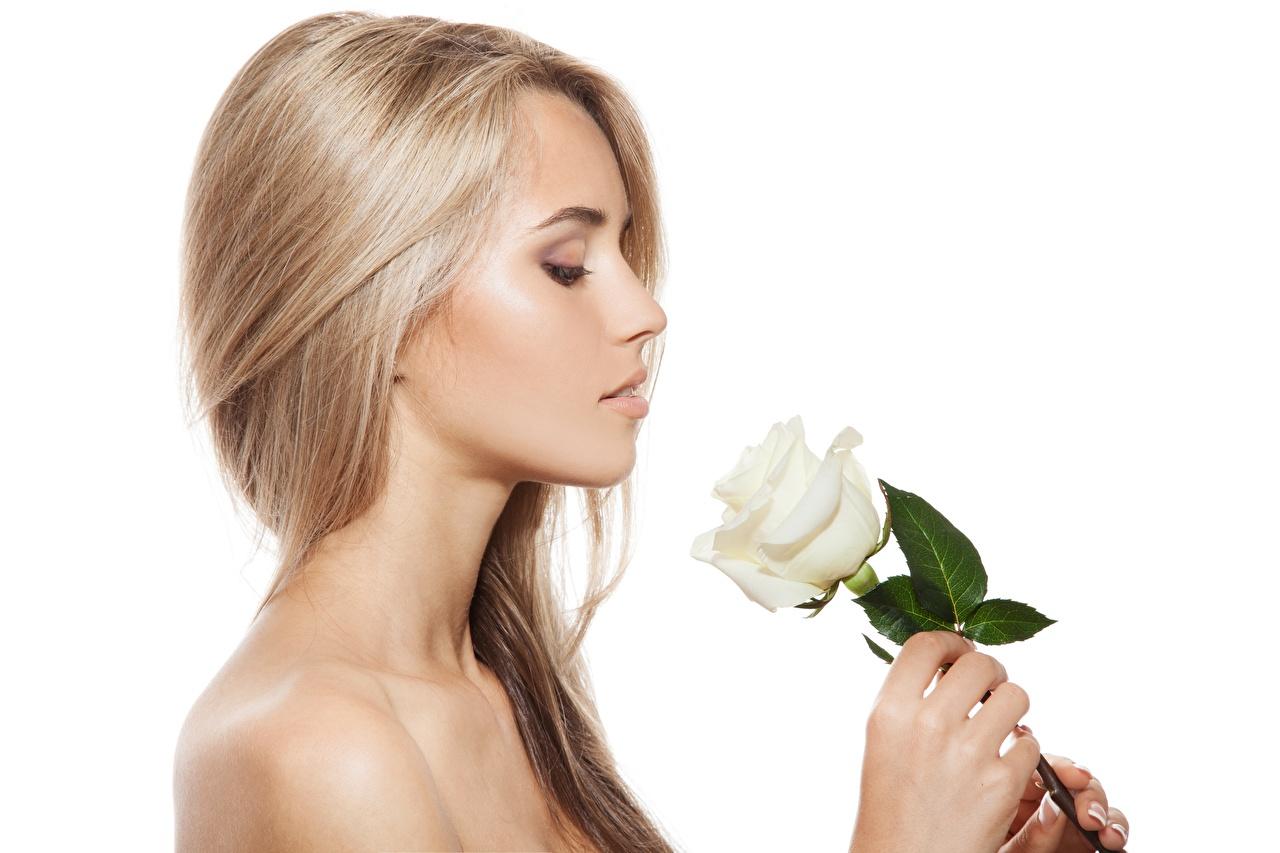 Bilder von Blond Mädchen Model Schminke Frisur Rose junge Frauen Weißer hintergrund Blondine Make Up Frisuren Rosen Mädchens junge frau