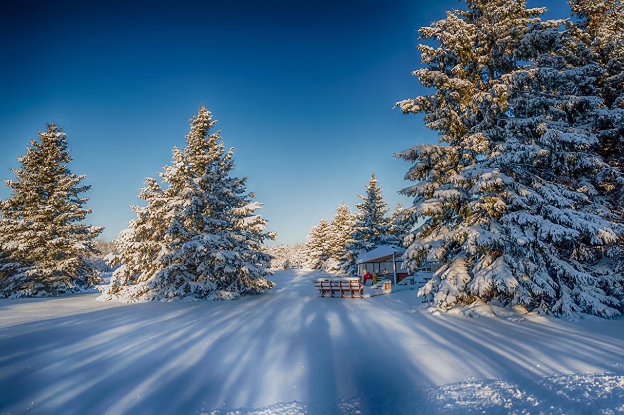 、冬、雪、トウヒ属、木、自然、