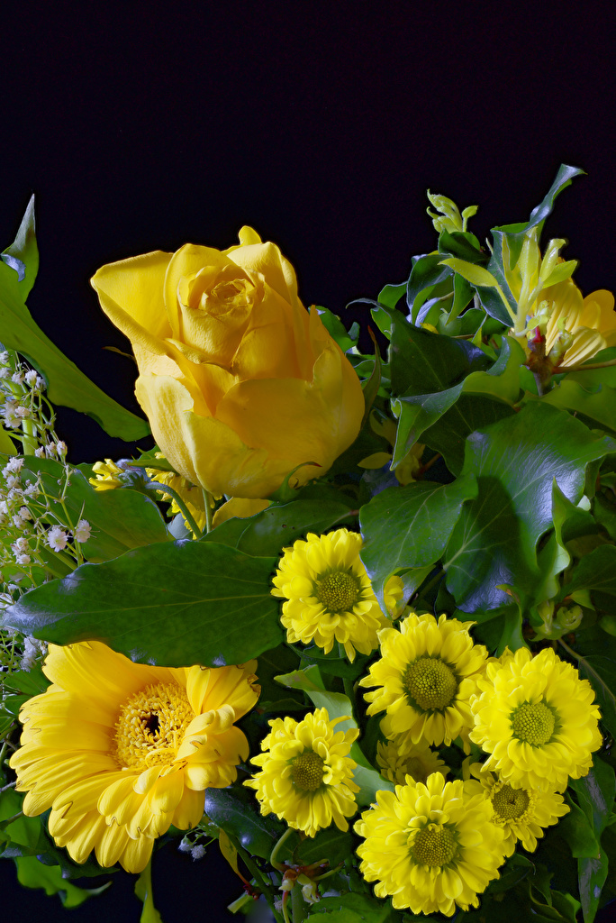 Wallpaper rose Yellow Gerberas Flowers Chrysanthemums Black background  for Mobile phone Roses gerbera Mums flower Chrysanths