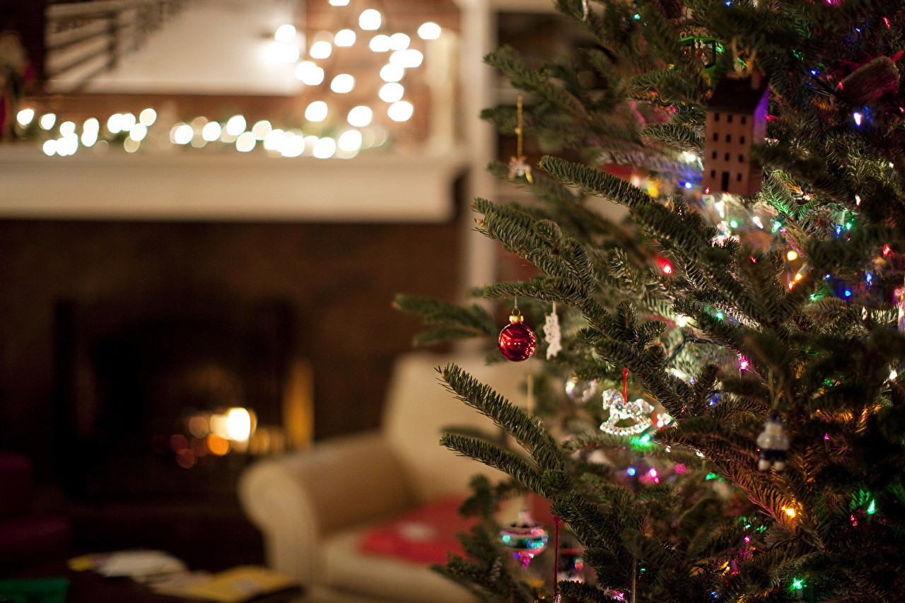 Picture Christmas Christmas tree Holidays New year New Year tree