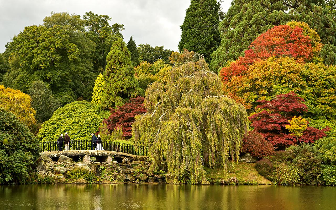 Immagine Regno Unito Sheffield Park Garden ponte Natura parchi Stagno Alberi Cespugli Ponti Parco Arbusti
