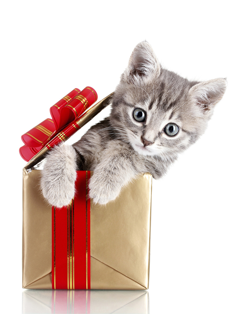 Photo kitty cat cat Christmas Box animal Staring White background  for Mobile phone Kittens Cats New year Glance Animals