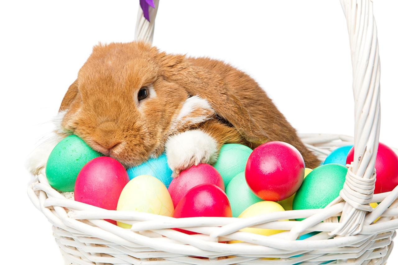Images Easter Rabbits Eggs Wicker basket Animals rabbit egg animal