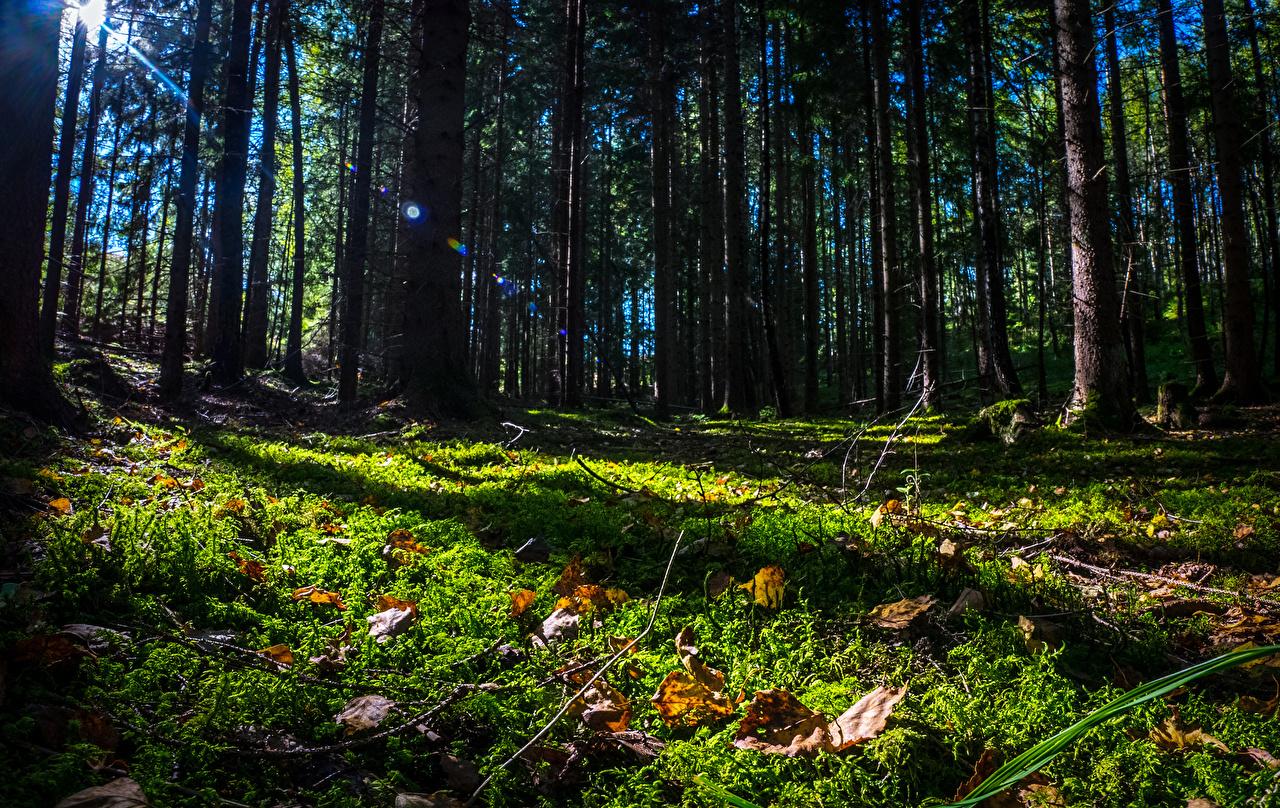 Fotos von Schweden Blattwerk Natur Wälder Gras Bäume Blatt