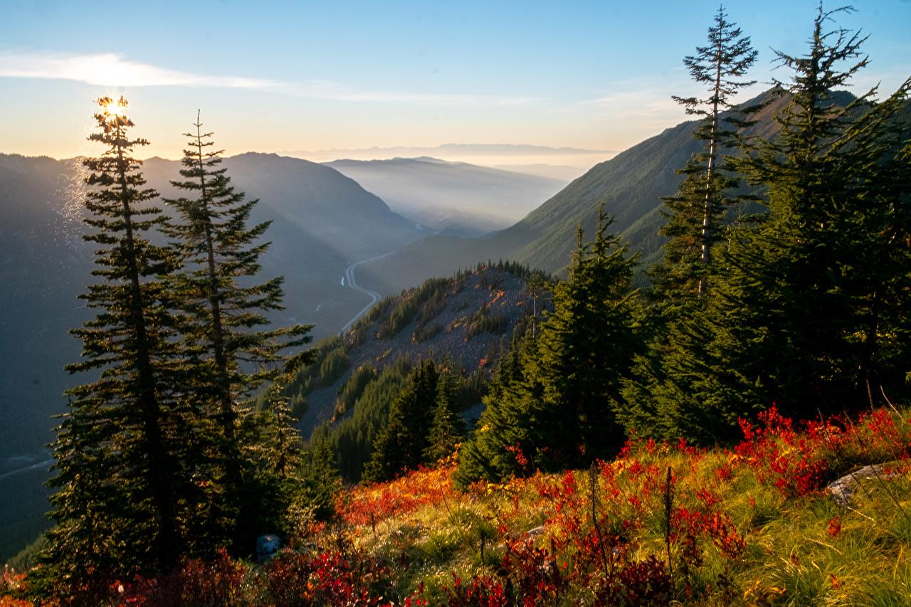 Foto Texas USA Natur Fichten Gebirge Gras Vereinigte Staaten