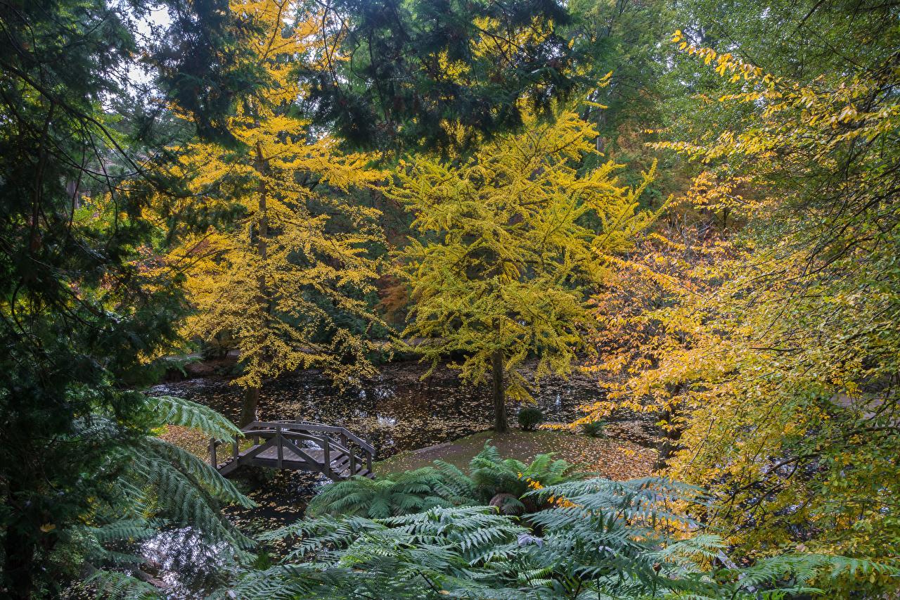 Bilder von Australien Alfred Nicholas Memorial Gardens Natur Herbst Brücken Park Teich Bäume