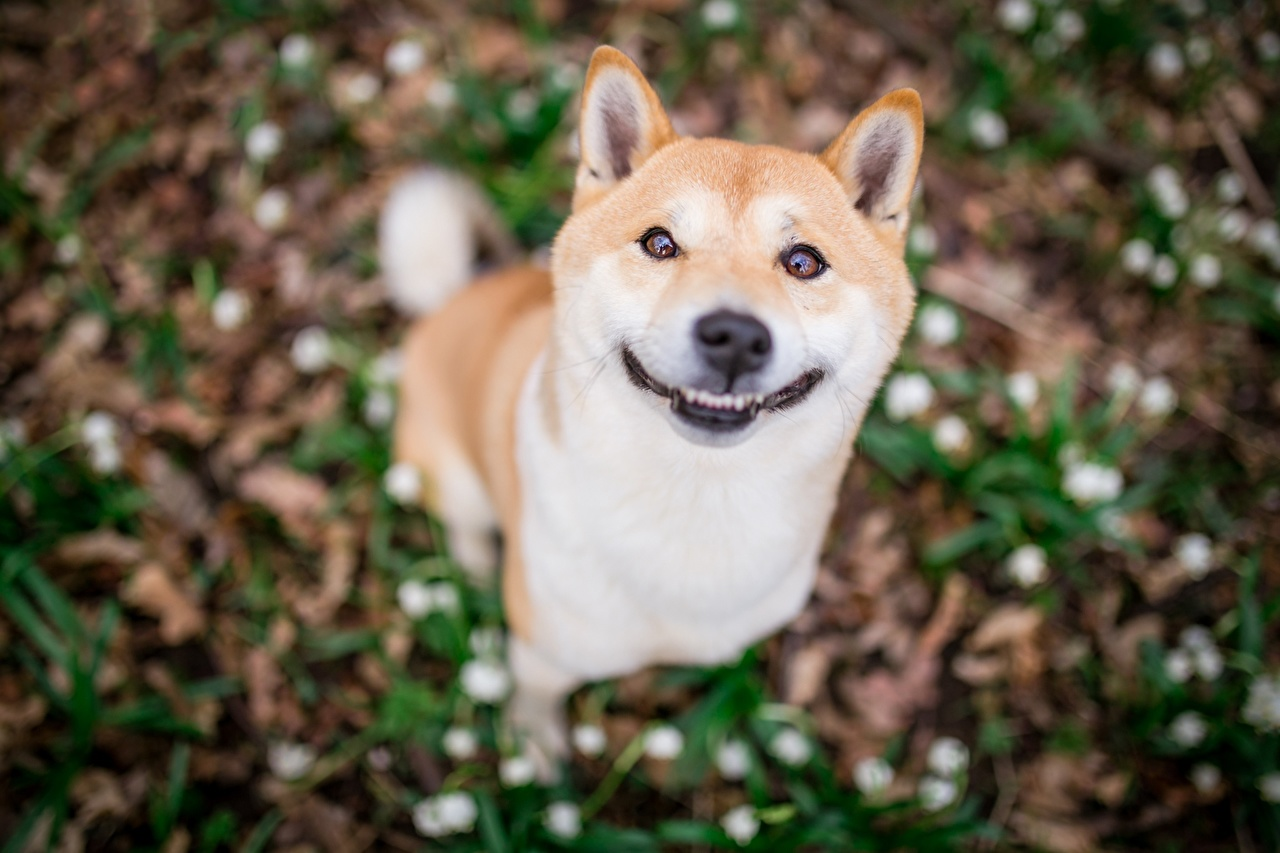 Image Dog Smile Funny Blurred Background Lovely Animals