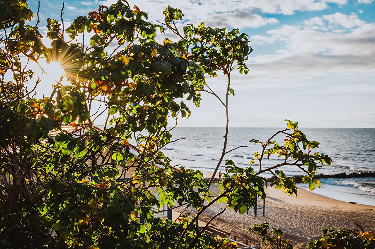 Foto Raggi di luce Russia Baltic Sea Zelenogradsk Rose Mare Natura La costa Arbusti 1ZOOM litorale Cespugli