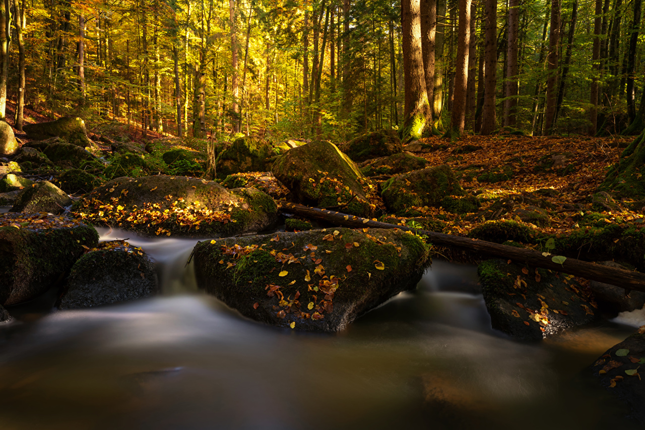 Desktop Wallpapers Bavaria Leaf Germany Creek Autumn Nature forest Moss stone Foliage brook Creeks Stream Streams Forests Stones